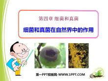 《细菌和真菌在自然界中的作用》细菌和真菌PPT课件2