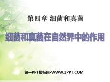 《细菌和真菌在自然界中的作用》细菌和真菌PPT课件7