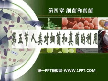 《人类对细菌和真菌的利用》细菌和真菌PPT课件