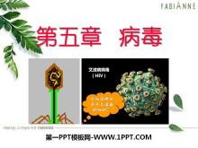 《病毒》PPT课件4