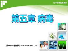 《病毒》PPT课件6