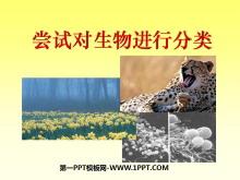 《尝试对生物进行分类》根据生物的特征进行分类PPT课件