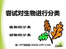 《尝试对生物进行分类》根据生物的特征进行分类PPT课件3
