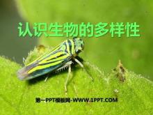 《认识生物的多样性》PPT课件