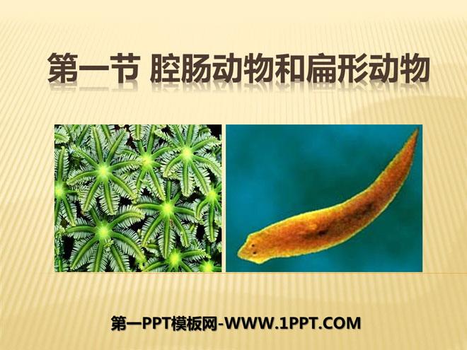 《腔肠动物和扁形动物》动物的主要类群PPT课件