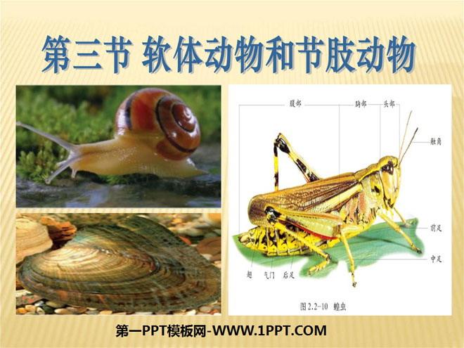 《软体动物和节肢动物》动物的主要类群ppt课件4