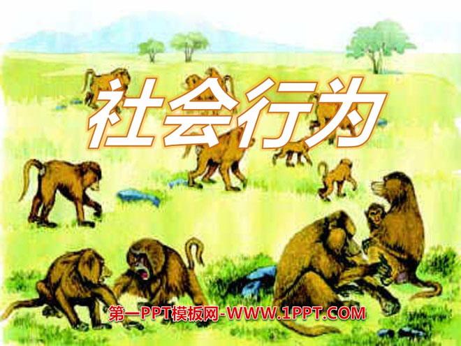 《社会行为》动物的运动和行为ppt课件3