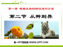 《从种到界》根据生物的特征进行分类PPT课件6