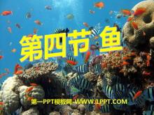 《鱼》动物的主要类群PPT课件5