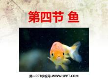 《鱼》动物的主要类群PPT课件2