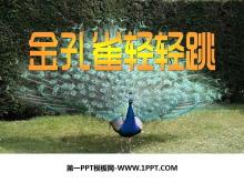 《金孔雀�p�p跳》PPT�n件2