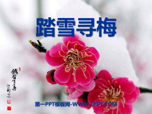 《踏雪寻梅》PPT课件3