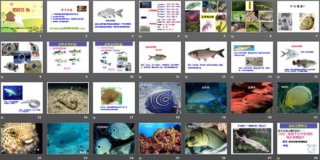 《鱼》动物的主要类群PPT课件