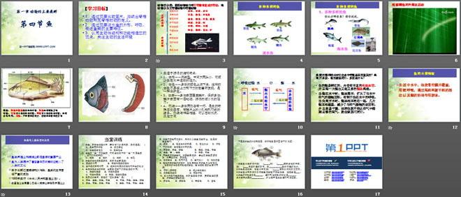 《鱼》动物的主要类群PPT课件3