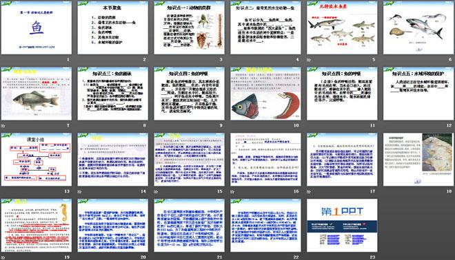 《鱼》动物的主要类群PPT课件4