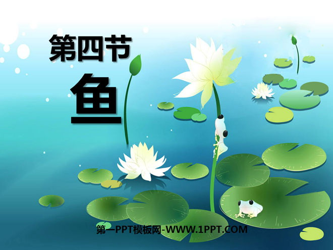 《鱼》动物的主要类群PPT课件6