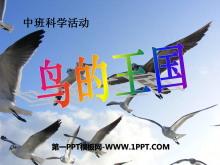 《鸟的王国》PPT课件