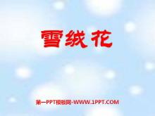 《雪绒花》PPT课件2