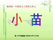 《小苗》PPT课件2