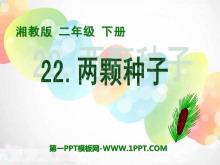 《两颗种子》PPT课件