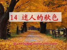 《迷人的秋色》PPT课件