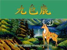 《九色鹿》PPT课件6