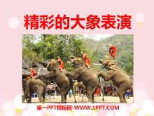 《精彩的大象表演》PPT课件3