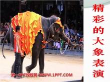 《精彩的大象表演》PPT课件4