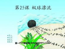 《蚁球漂流》PPT课件2