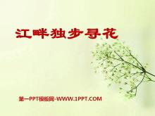 《江畔独步寻花》PPT课件6