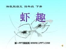 《虾趣》PPT课件2