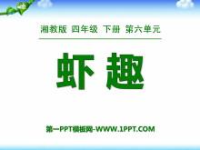 《虾趣》PPT课件4