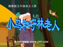 《小鸟和守林老人》PPT课件2