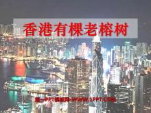 《香港有棵老榕�洹�PPT�n件2