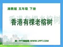 《香港有棵老榕�洹�PPT�n件3