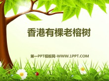 《香港有棵老榕�洹�PPT�n件4