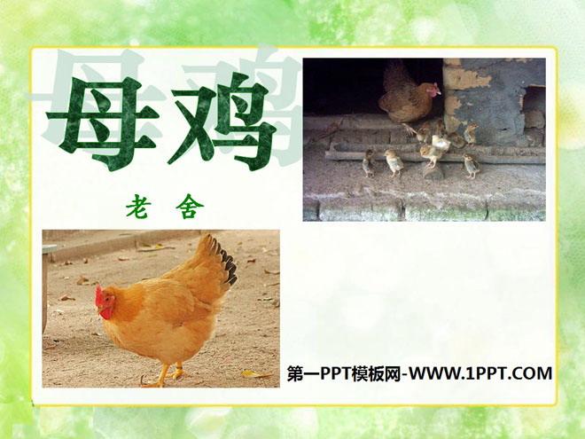 《母鸡》PPT课件3
