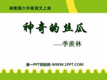 《神奇的丝瓜》PPT课件5
