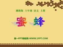 《蜜蜂》PPT课件5