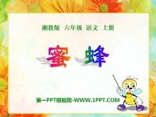 《蜜蜂》PPT课件6