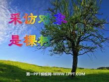 《采访对象是棵树》PPT课件3