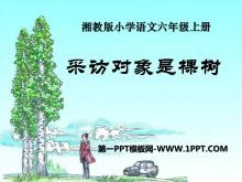 《采访对象是棵树》PPT课件4
