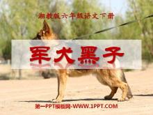 《军犬黑子》PPT课件3