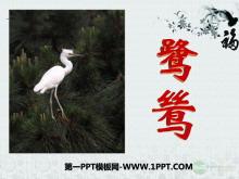 《鹭鸶》PPT课件4