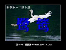 《鹭鸶》PPT课件