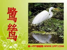 《鹭鸶》PPT课件3