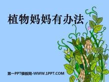 《植物妈妈有办法》PPT课件5