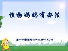 《植物妈妈有办法》PPT课件6