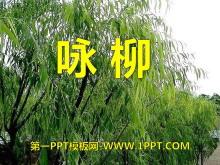 《咏柳》PPT课件11