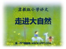 《走进大自然》PPT课件5